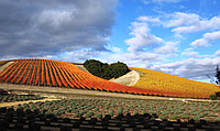 Niner Vineyards Heart Hill in Paso Robles Wine Country