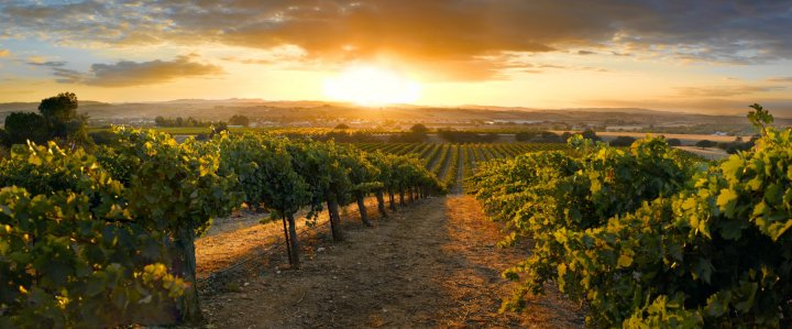 Wine Country Wine Tours