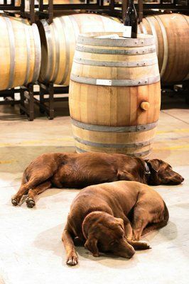 Dog Friendly Wine Tour